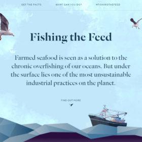Fishing the Feed「餌を釣る?」海の中で何が起きているのか